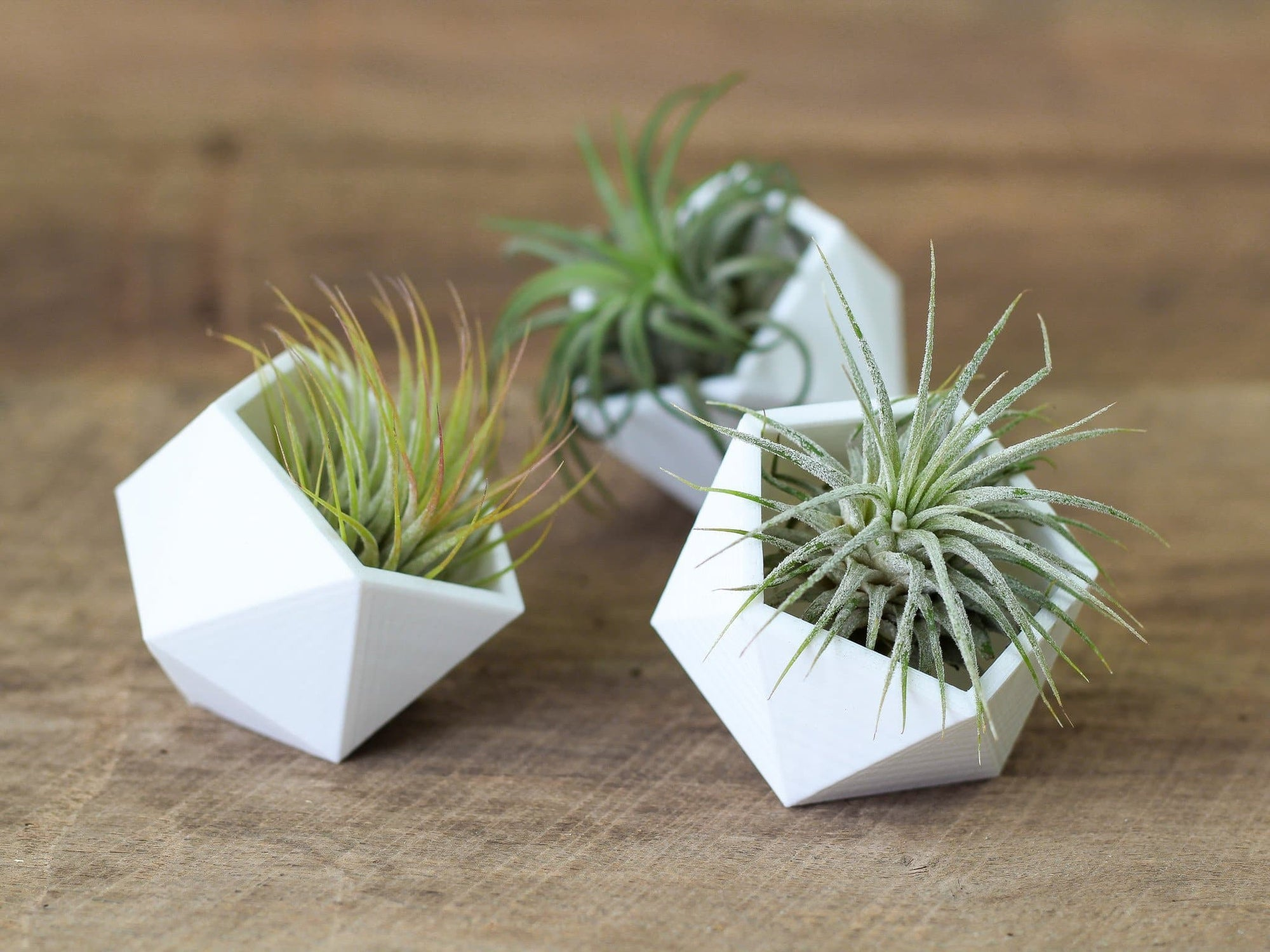 geometric tillandsia air plant holders