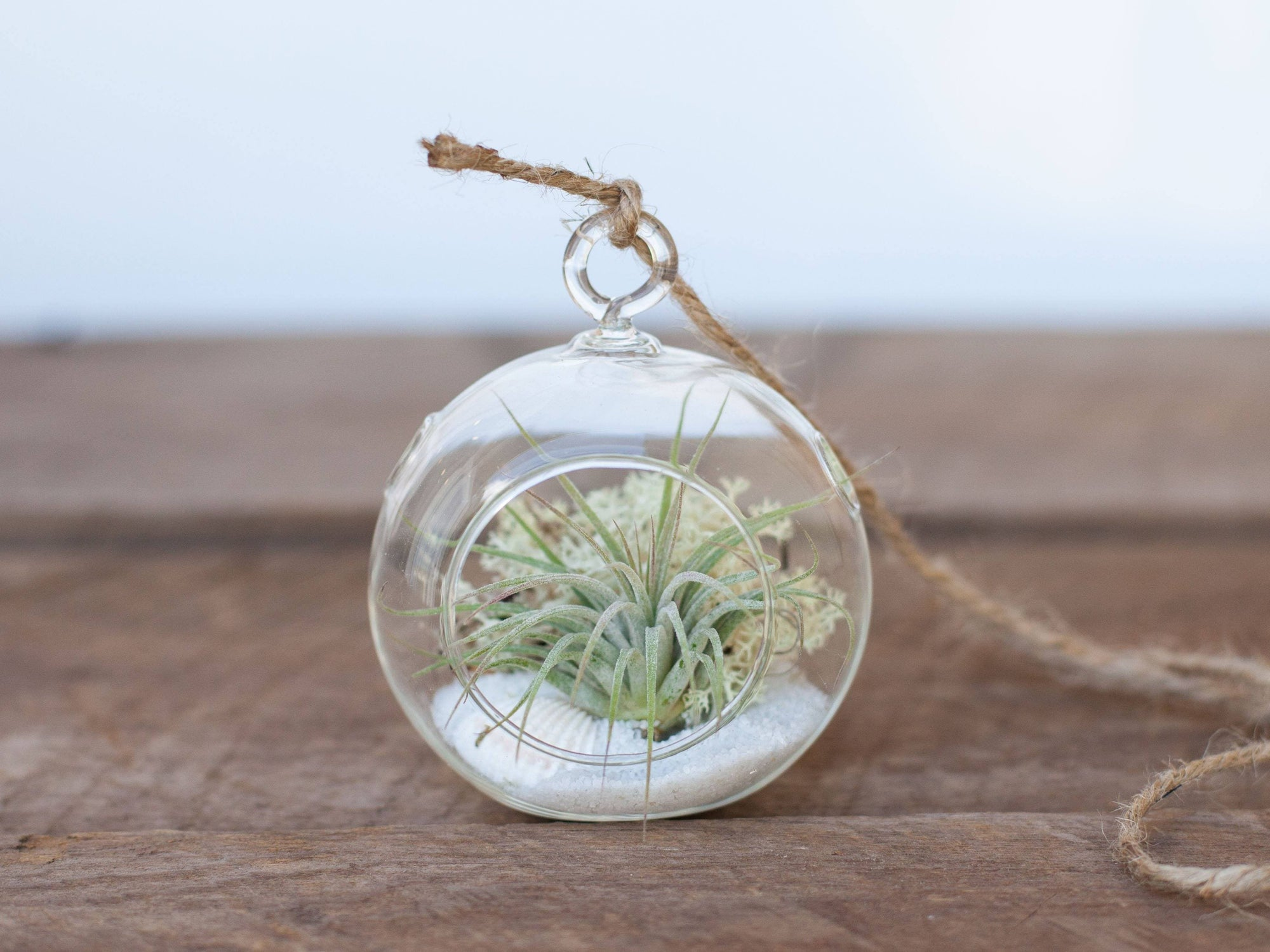Mini Air Plant Terrarium Ornament - White Sand | Air Plant Design Studio