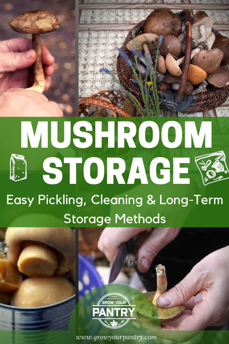 mushroom_storage_method_infographic