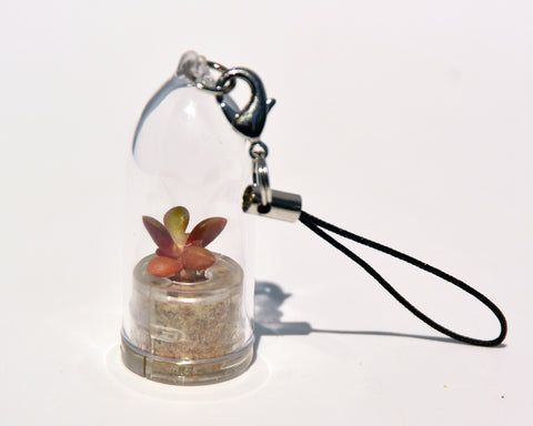 Pinky Rose Live Plant Necklace - Terrarium Living Plant BooBoo Plant.