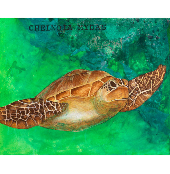 Chelnoia Mydas, Sea Turtle Canvas Giclée