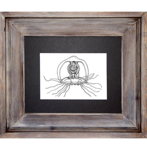 Immortal Jellyfish, Framed