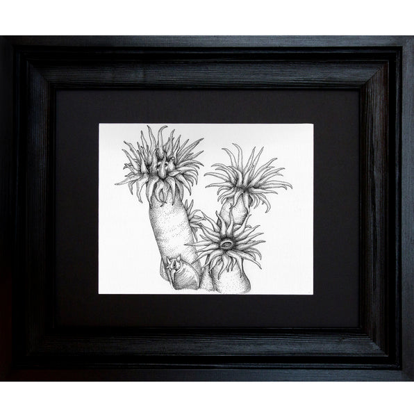Sea Anemone, Framed