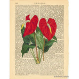 Anthurium Flamingo Flower Art Print