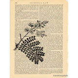 Brazilwood Branch Art Print