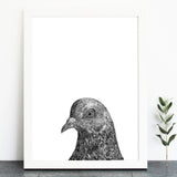 'Peter The Pigeon' Print