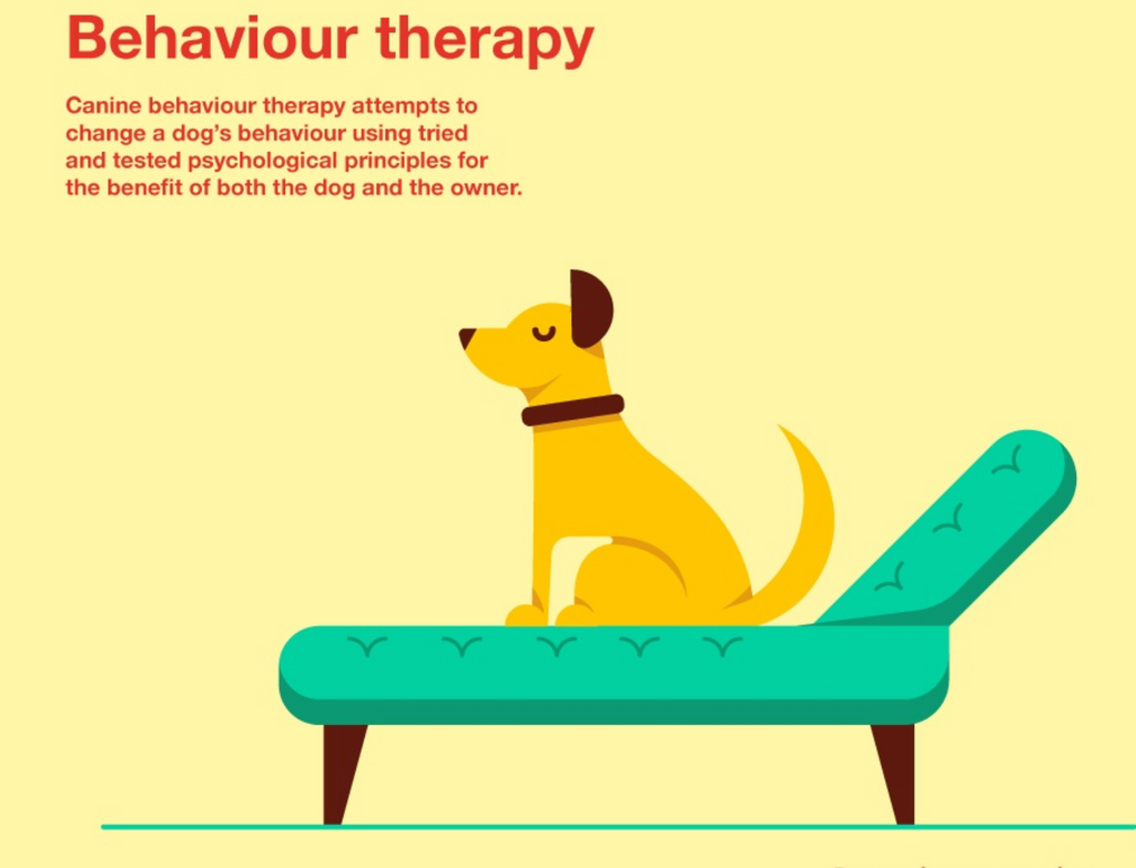 Behavioural Tips for Bringing Your Dog to Work