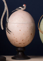 Pin-Tailed Whydah Egg Caddy