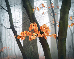 Autumn leaves in a forest photo