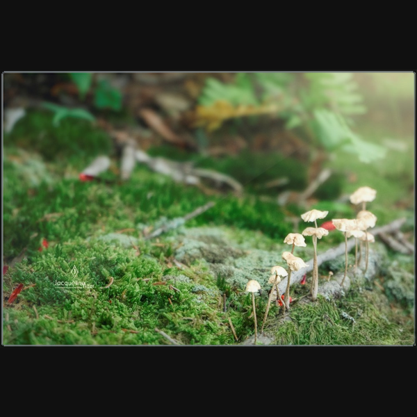 Magic Mushrooms - art photograph on metal print