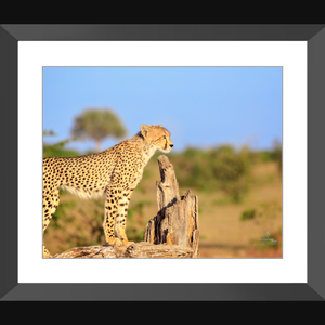"""The Sentinel"" - Framed art photograph print with mat"