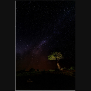 Milky Way Over African Boab Tree - art photograph under acrylic wall art print