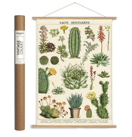 Cacti & Succulents Paper + Hanging Kit