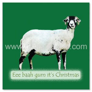 Swaledale Sheep Yorkshire Christmas Cards