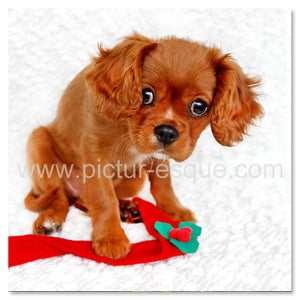 Cavalier King Charles Puppy Christmas card