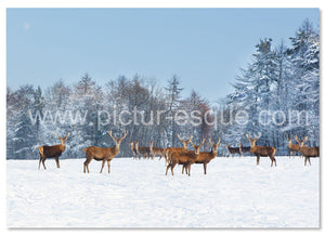 Herd of deer in the snow Christmas card