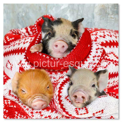 Pigs in Blankets Christmas cards