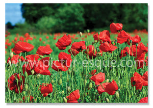 Poppies blank notecard - lest we forget on Remembrance Sunday