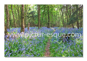 Bluebell notecards by Charlotte Gale