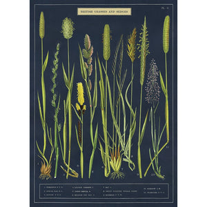 Cavallini Poster Wrap - Grasses and Sedges