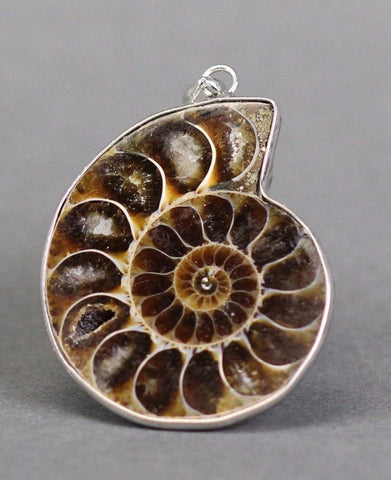 Sliced Fossil Ammonite Pendant (Dark) - 1.1 to 1.3 inches