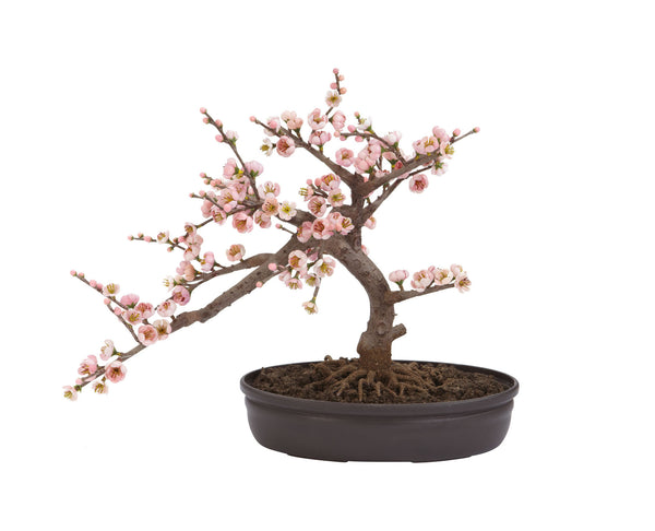 Bonsai Cherry Blossom