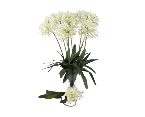 African Lily White (12)