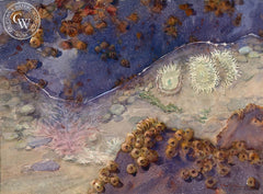 Tide Pools, California art by Frank LaLumia. HD giclee art prints for sale at CaliforniaWatercolor.com - original California paintings, & premium giclee prints for sale