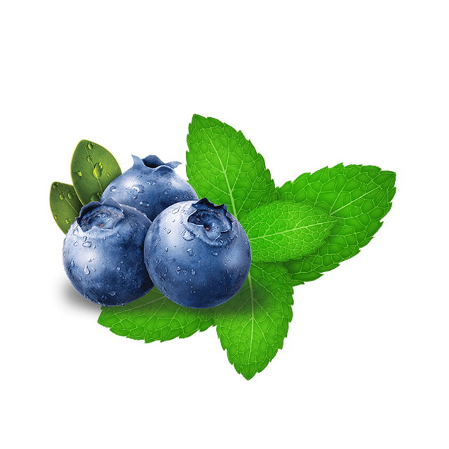 Hookafina Blueberry Mint - Lavoo Design