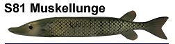 "Bear Creek 10"" Pike Spearing Decoy Muskellunge (Includes 1 Decoy) S81"