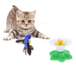 Interactive cat toy, with hummingbird