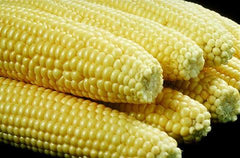 Golden Bantam Sweetcorn - ORGANIC - Heirloom Vegetable - 10 Seeds