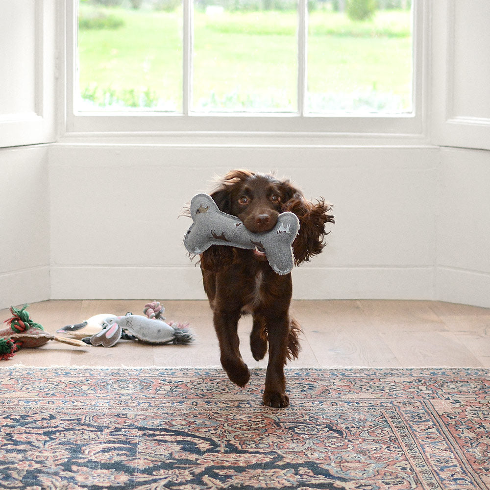Behind the scenes of the Sophie Allport dog photo shoot