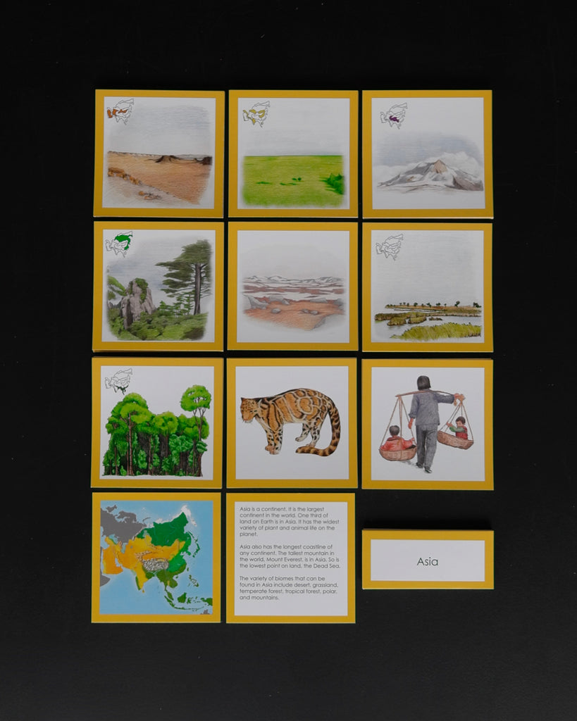 Asia Biome Cards-Elementary