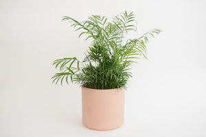 "8"" Pot / Planter - Terra Cotta Cylinder"