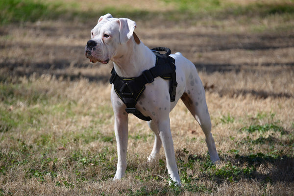 DT Fun Harness w/ Chest Support for XL dogs