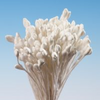 Rose Tip Stamens Bundle - White