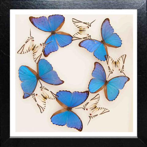 Framed Butterflies Collection Panels - Insect Frame UK