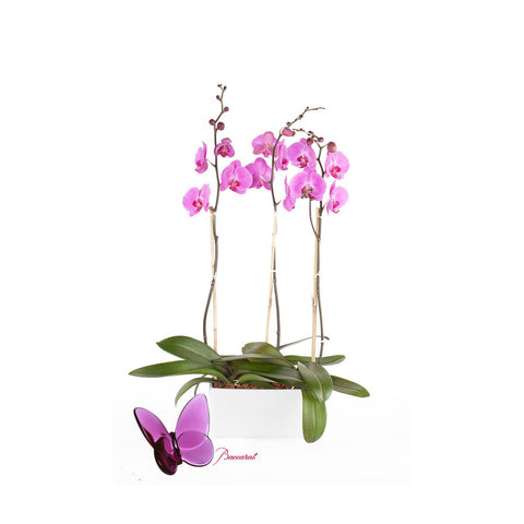 """Orchids with Love"" Special gift for Mom"