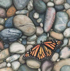 Monarch on the Rocks, watercolour by Karen Richardson