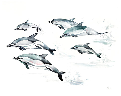 Kelly Clause - Common Dolphin