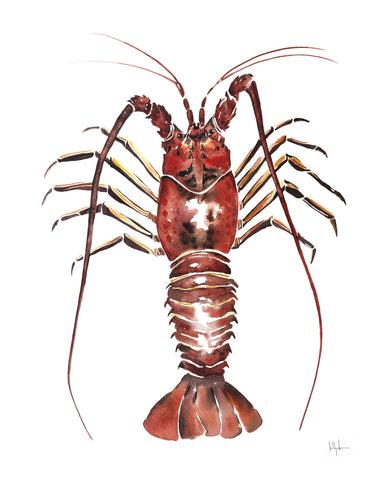 Kelly Clause - Spiny Lobster