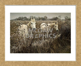 White Horses (Framed)