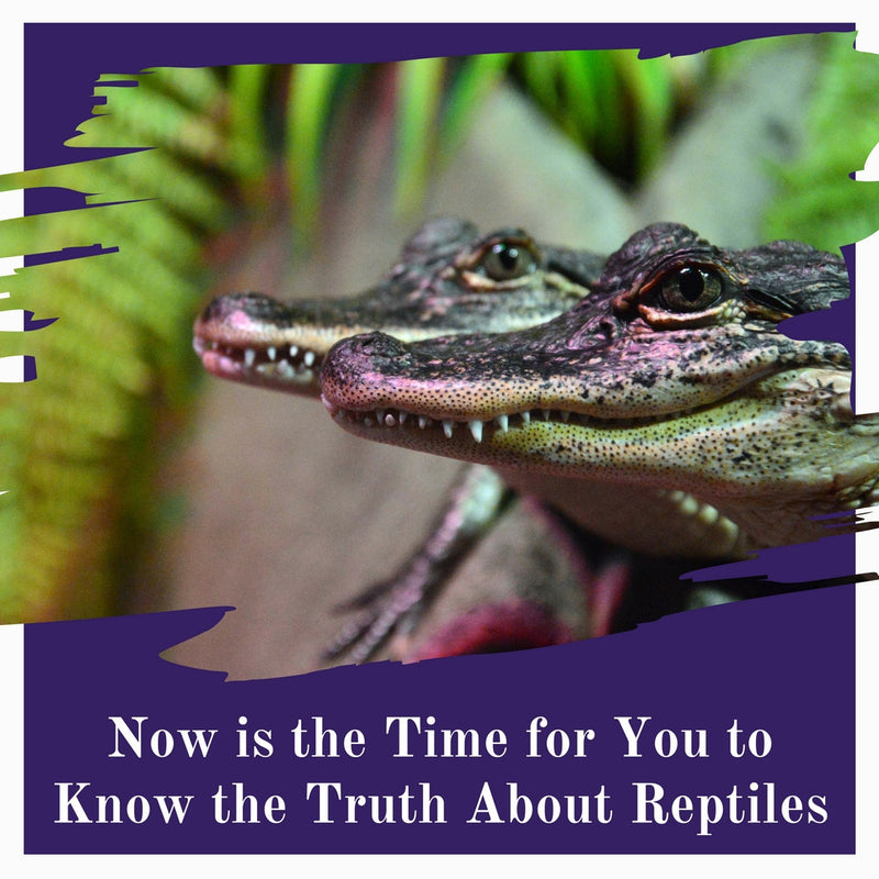 Now Is The Time For You To Know The Truth About Reptiles