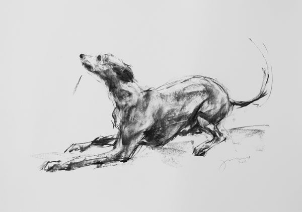 """Wanna Play?"" Large Charcoal Whippet Study sketch ORIGINAL"