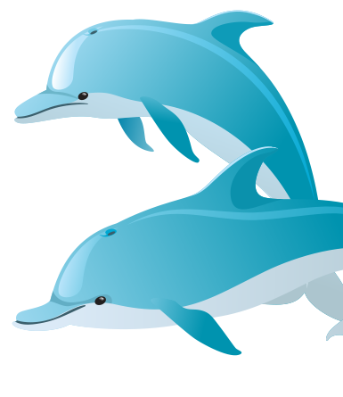 Dolphins- vector
