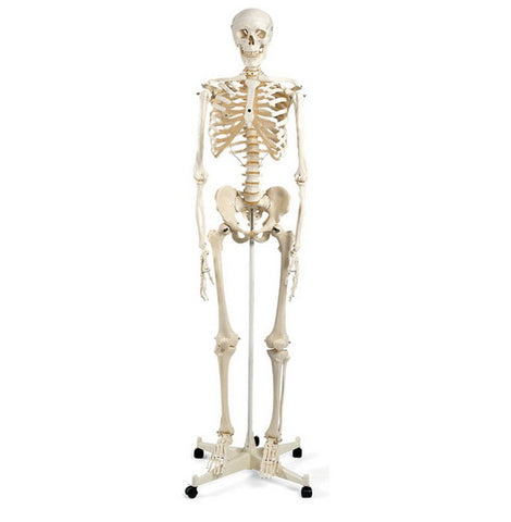 MR. PLAIN SKELETON