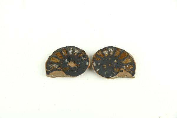 Authentic Ammonite Fossil Cut Polished Pair From Morocco- 3 to 5cm