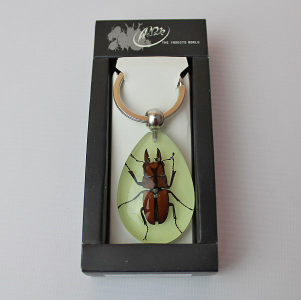 Real Insect 'Antler Horned Beetle' Glow Keyring