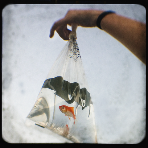 Bagged Goldfish | Digital + Vintage Camera